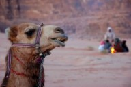 camel-and-camp-fire-in-the-desrt-of-wadi-rum